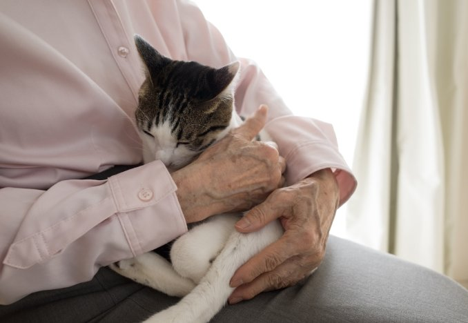 TOP元気な高齢者に抱かれる猫.jpg